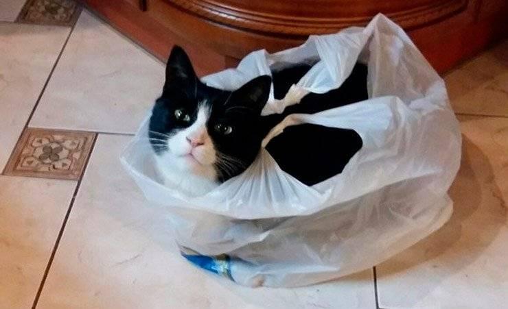 Как отучить соседских котов гадить на участке