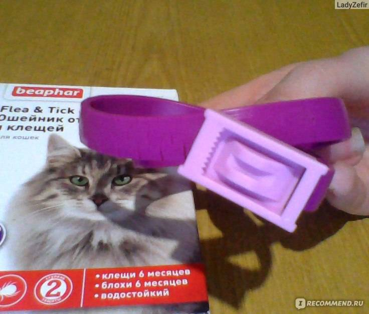 Ошейник от блох для кошек как действует может ли кошка отравиться