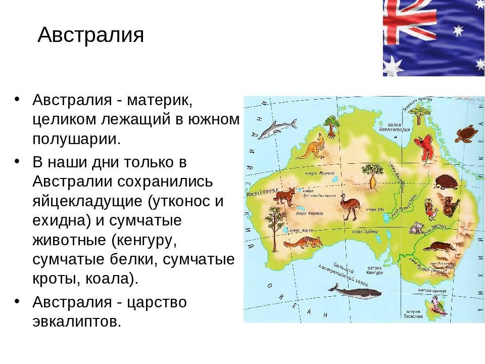 Австралийский мист – экзотическое домашнее животное
