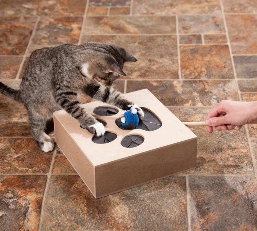 Как играть с кошкой дома: игрушки и развлечения