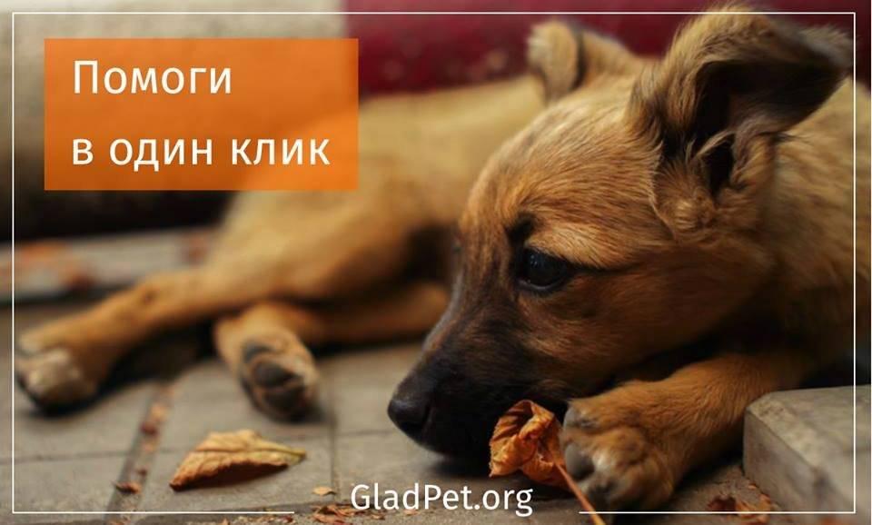 10 способов помочь бездомным животным