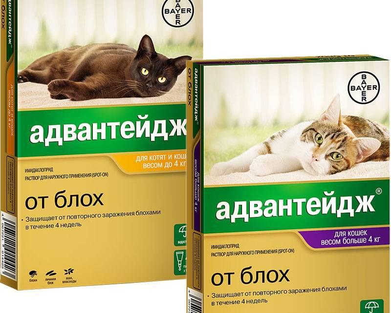Средство от блох для кошек