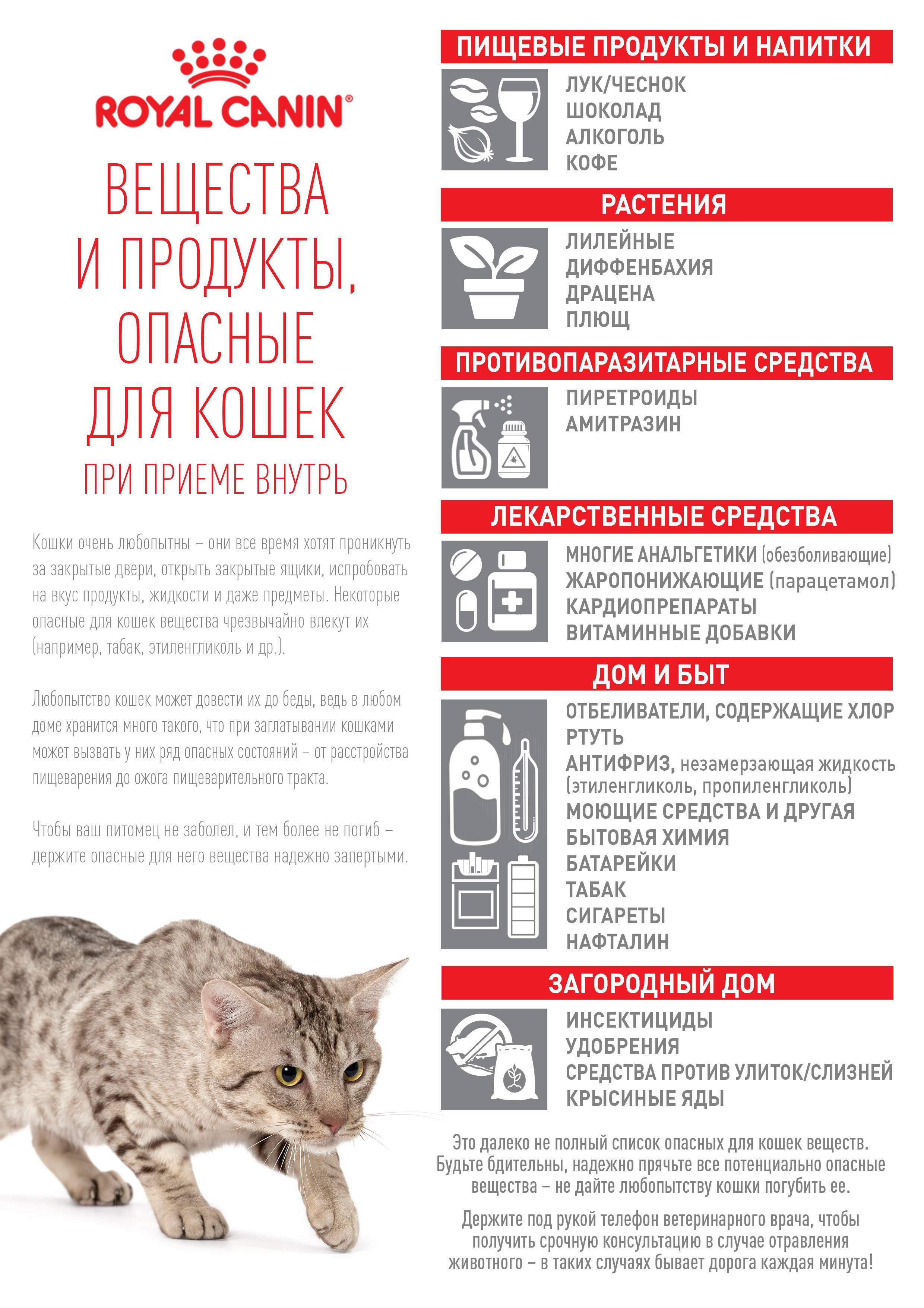 Вреден ли сухой корм для кошек: разберём вред и пользу по науке