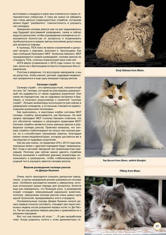 Самая большая кошка в мире: топ-10 крупных пород домашних питомцев