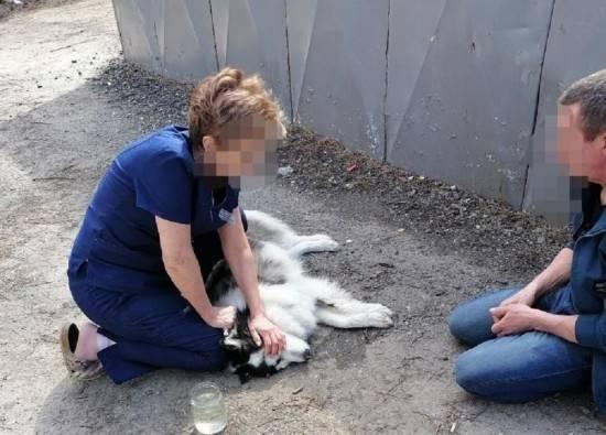 Каких собак нельзя стричь | не нужно подстригать ножницами или машинкой
