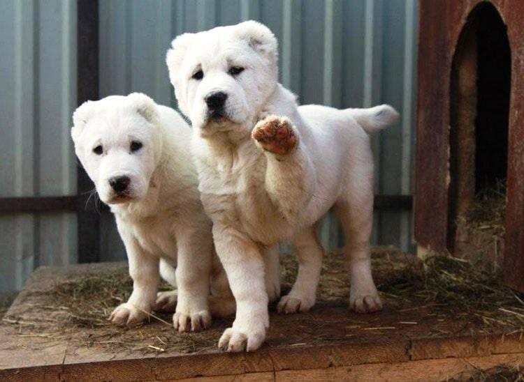 Японские породы собак: названия и фото (каталог)