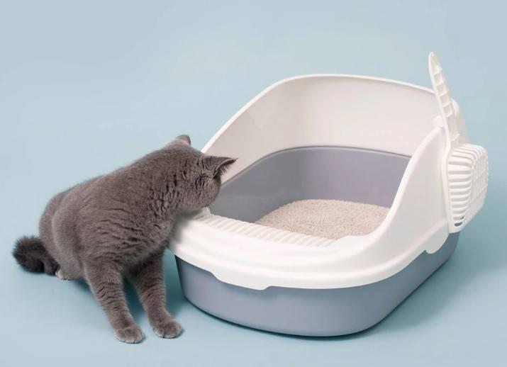 Лоток для кошки или кота, особенности выбора кошачьего туалета (открытый, закрытый, домик, автоматический, биотуалет, прочие виды), отзывы