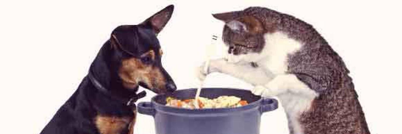Какой корм лучше для стерилизованных кошек: обзор производителей, рейтинг, отзывы ветеринаров о составах
