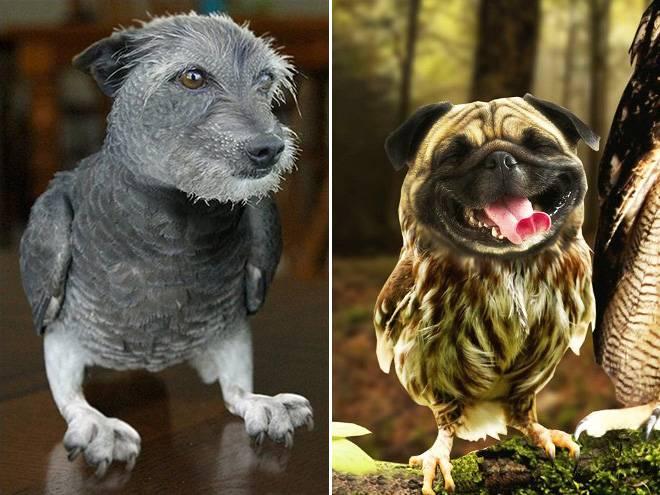 Собаки, похожие на волков: описание пород
