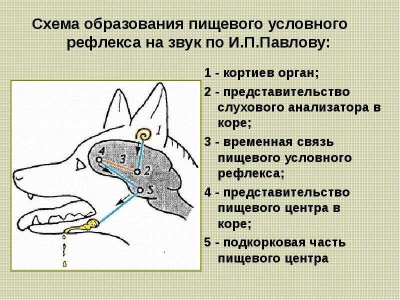 Котенок чихает: почему и что делать