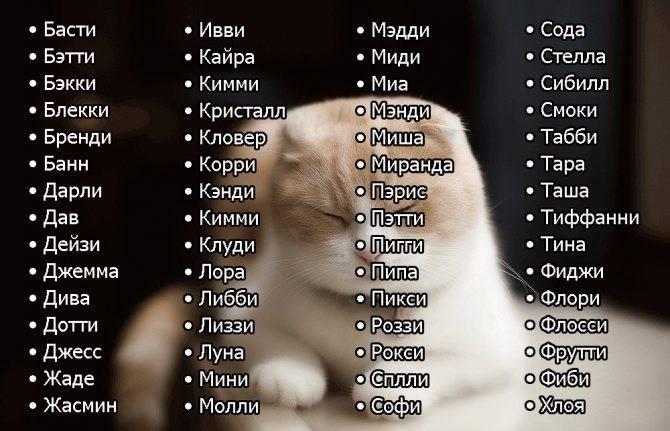 Как назвать серого котенка мальчика: популярные клички