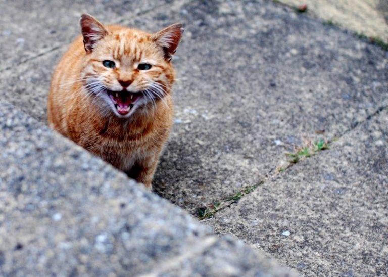 Как приручить дикого котенка или кошку