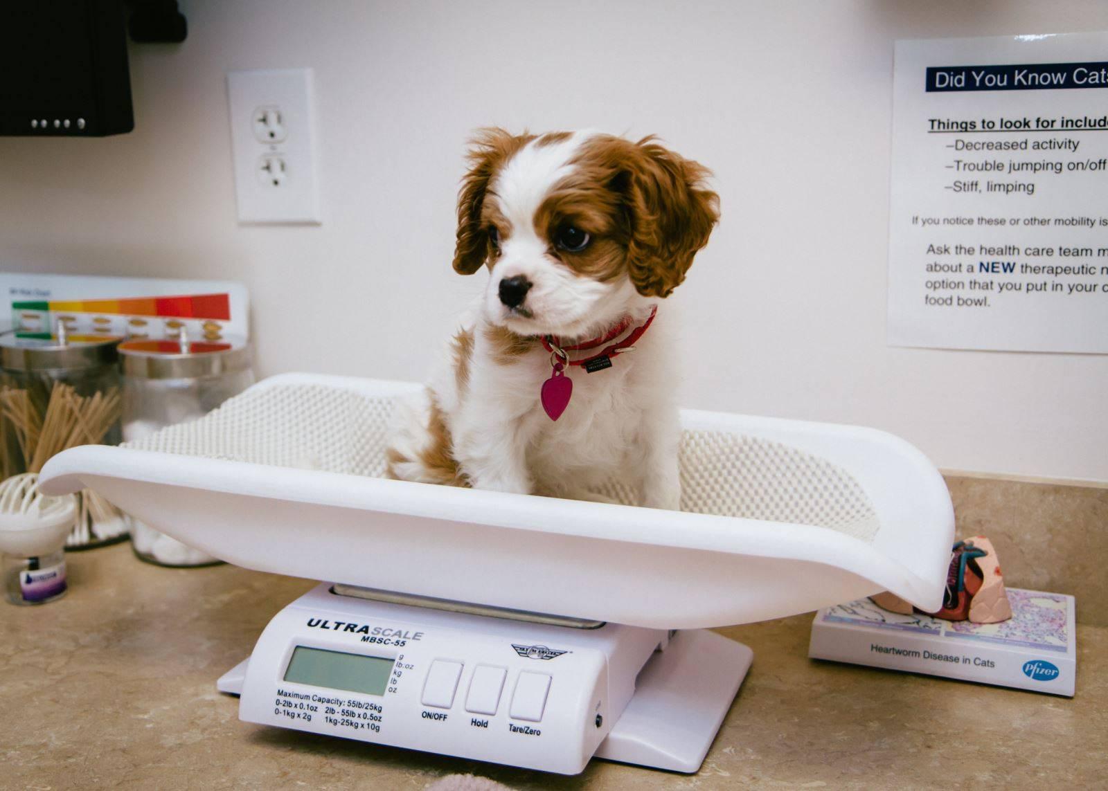 Как защитить собаку в жару дома, на улице и в поездке