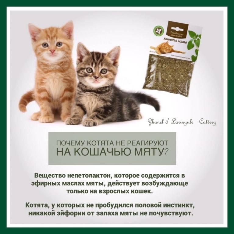 Кот и валерьянка: секрет зависимости