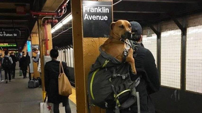Правила перевозки собак 2021: в поезде, самолете, автобусе, электричке, авто