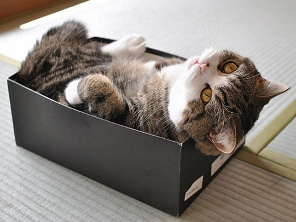 Почему коты любят пакеты и коробки