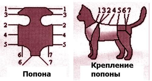 Попона для кошки и кота (36 фото): виды попон после стерилизации и кастрации. как делать послеоперационную попону своими руками? как ее носить и когда можно снять?