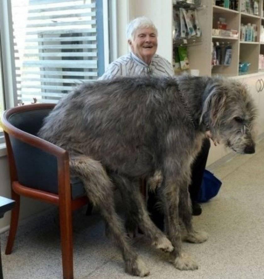 Самые долгоживущие породы собак - сколько лет живут породы собак-долгожителей - petstime.ru
