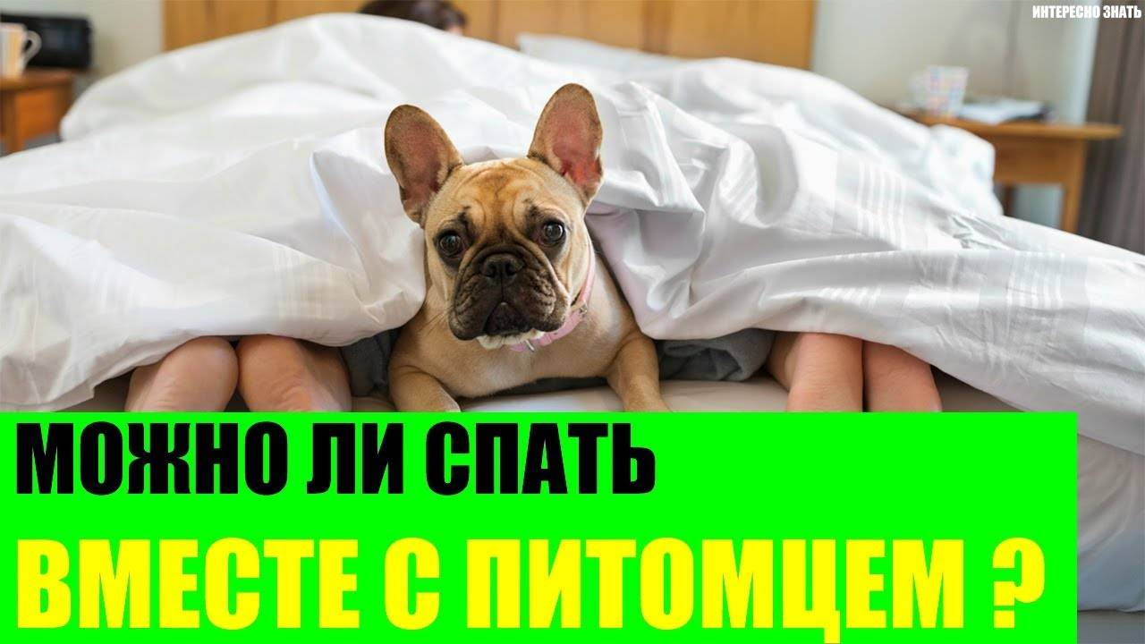 Почему собака спит с хозяином в одной постели