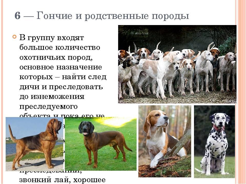 Из глубины веков: список самых древних пород собак