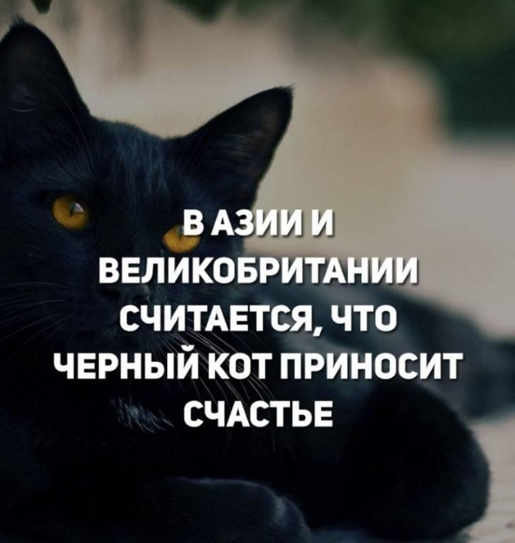 Черная кошка: приметы и суеверия черная кошка: приметы и суеверия