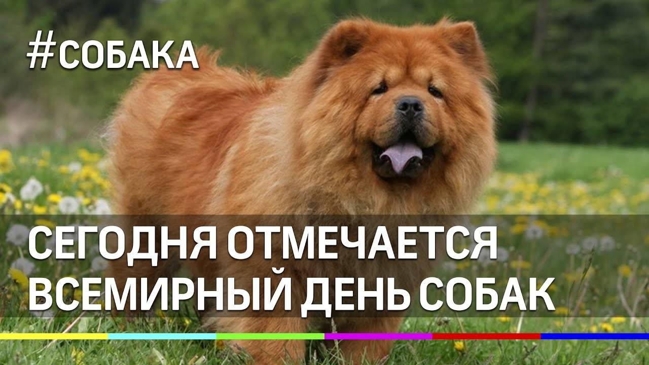 30 ноября планета отмечает всемирный день домашних животных