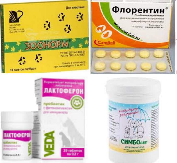 Ветом 11 (1): инструкция по применению для кошек, аналоги препарата, отзывы о лечении животных