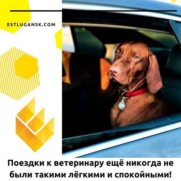 Советы по путешествию с кошкой в машине