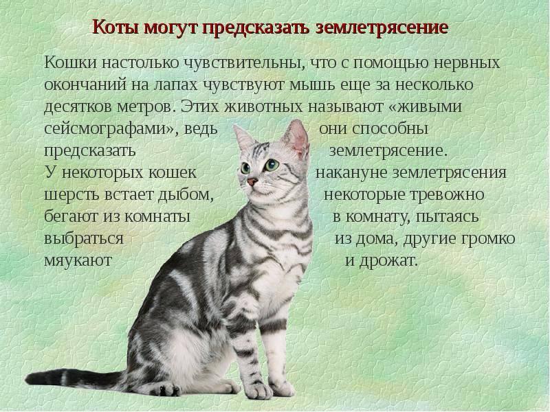 Агрессивный кот: что делать?