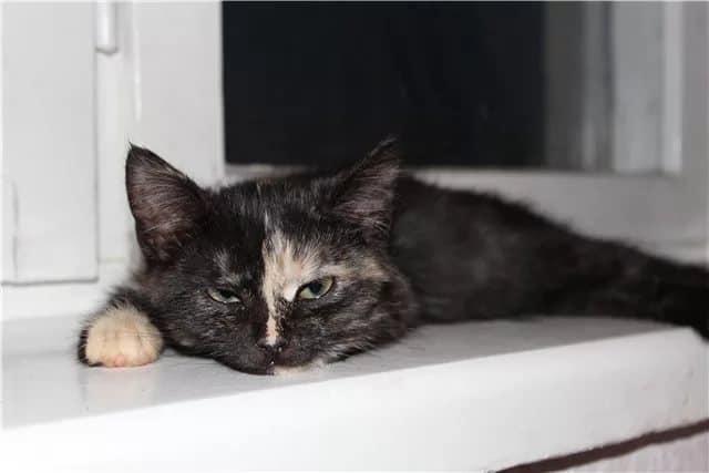 Почему кошку тошнит: симптомы заболеваний - рвота.
