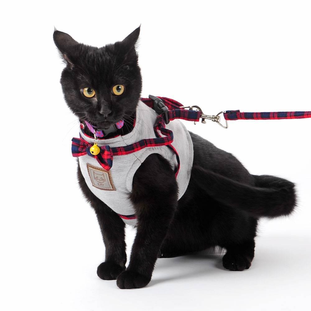 Шлейка для кошек: как одеть шлейку на кошку, поводок для кошек, приучение кота к шлейке и прогулкам