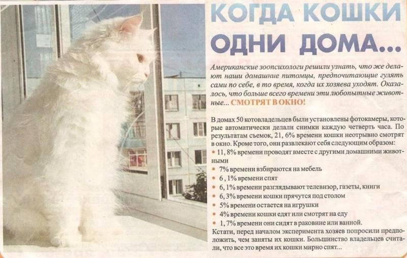 Что кошки думают о людях: исследования джона брэдшоу
