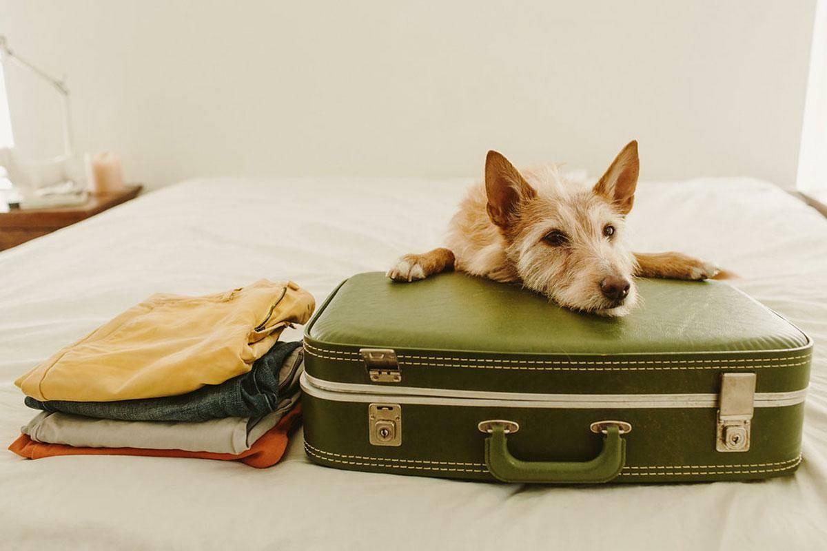 Передержка для собаки: что это такое и где ее можно оставить, особенности услуги