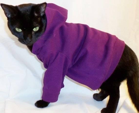 Одежда для кошек и котов: необходимость использования, как выбрать костюм в магазине и сделать своими руками