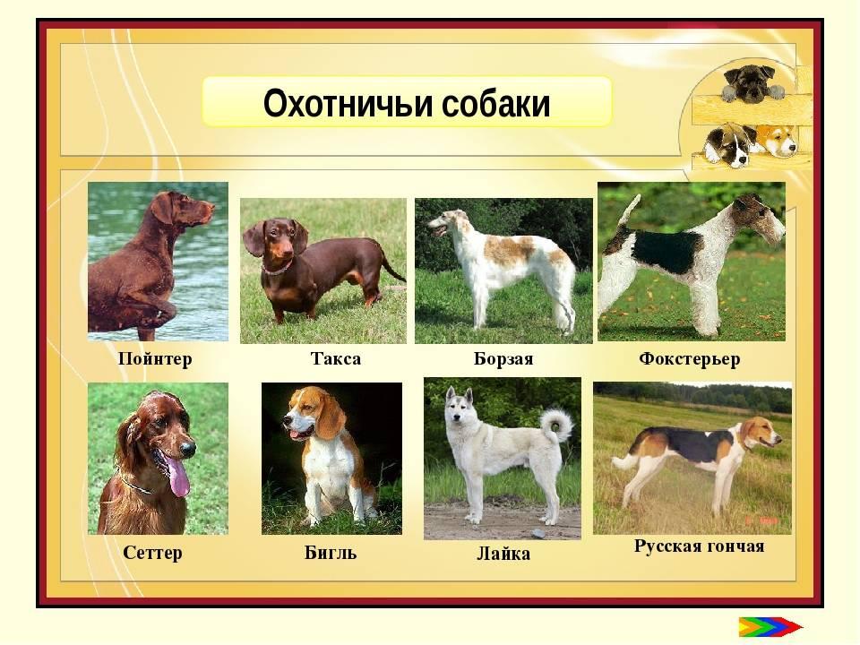 Породы собак: все собаки от а до я — список по алфавиту