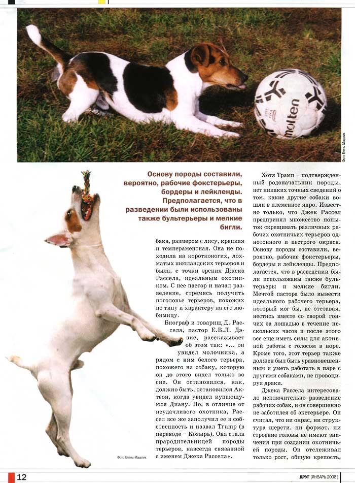Описание породы собак джек рассел терьер, характер, история
