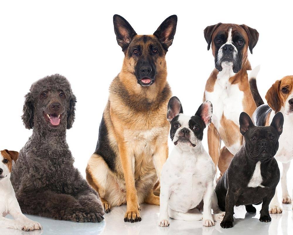 Как выбрать собаку для частного дома? топ-8 лучших пород