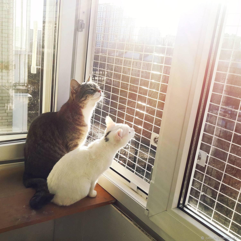 Приметы про кошек в доме (квартире) – умывается, чихает, подобрать котенка с улицы