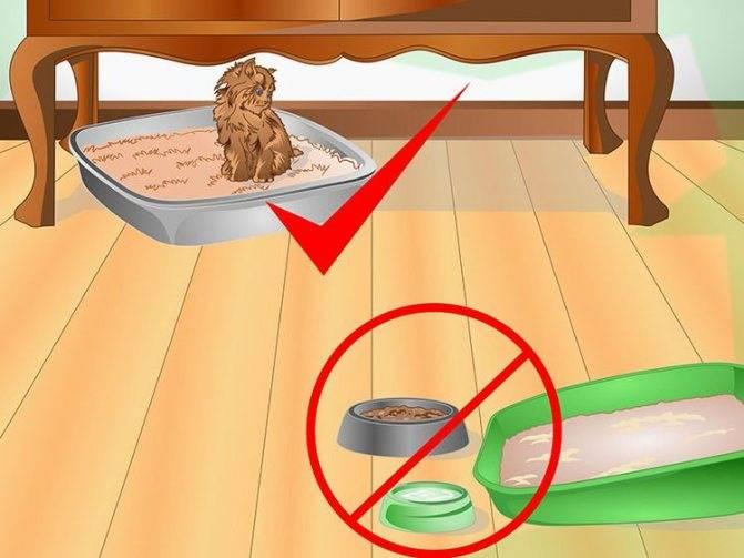 Что делать, если кошка начала гадить на кровать, возможные причины. необычные приметы: кошка гадит на кровать если кот гадит на кровать как отучить