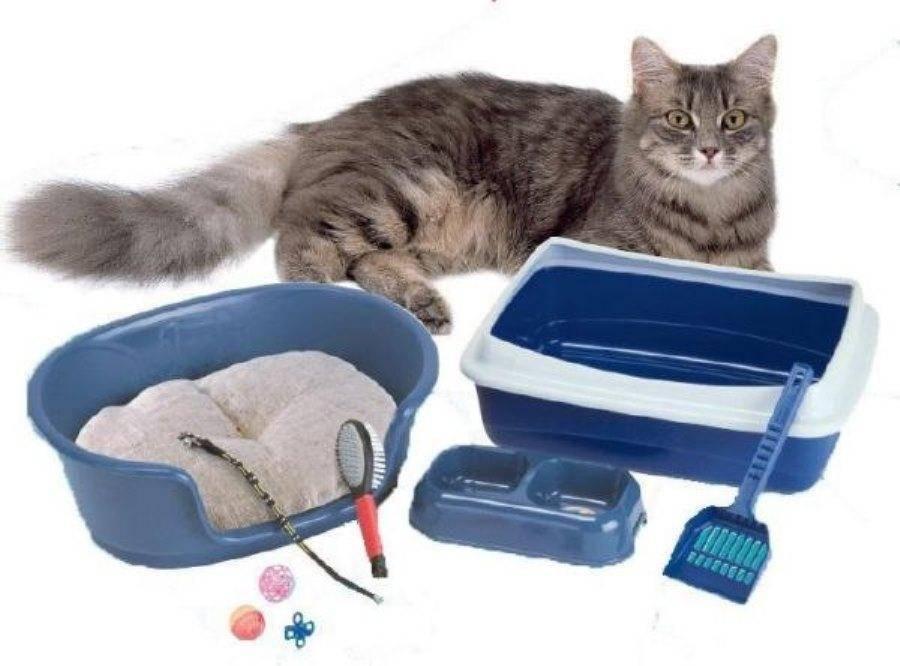 Что нужно для котенка в квартире: полный список