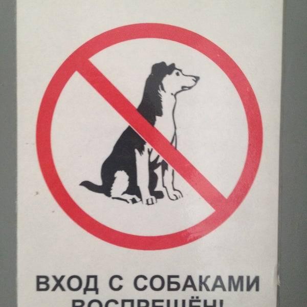 Животным здесь не рады: можно ли заходить в магазин с собакой