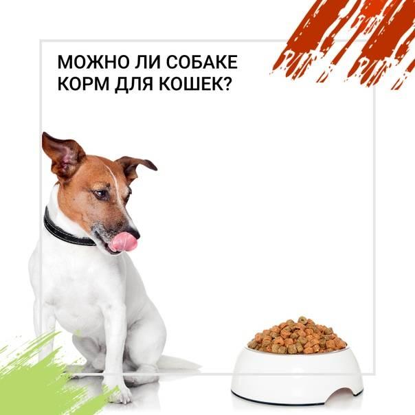 Как приучить щенка к сухому корму: подсказки для владельцев
