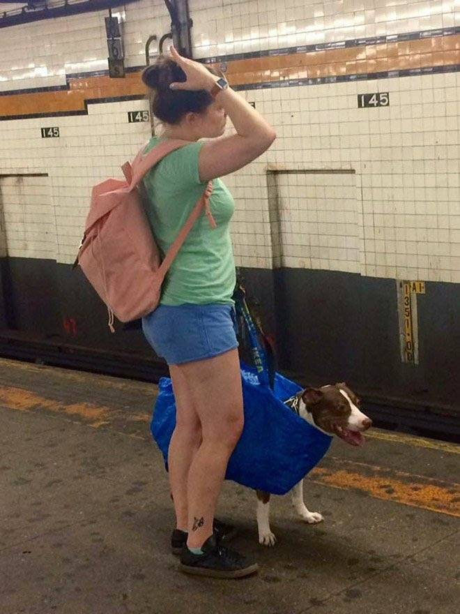 Правила провоза собаки в метро