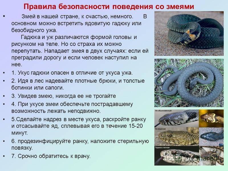Собаку/кошку укусила змея, что делать?