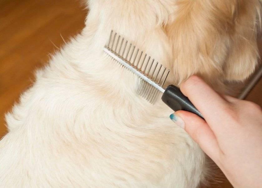 Почему у собак появляется свищ и как лечить