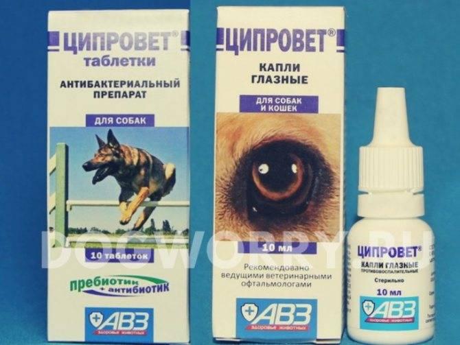 Ципровет глазные капли, бактерицидные и противовоспалительные