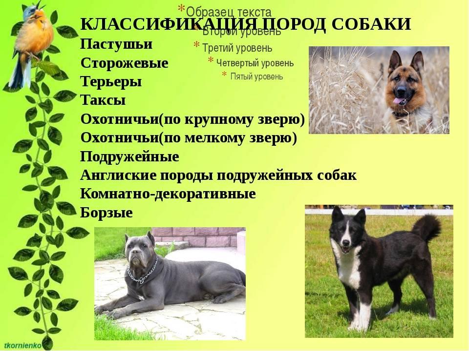 Служебные собаки. описание, особенности, дрессировка и породы служебных собак | живность.ру