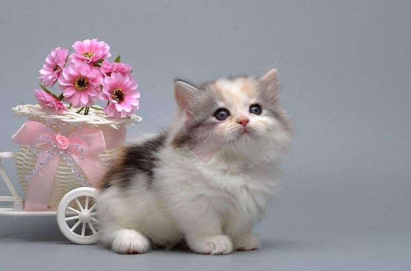 Самые маленькие кошки