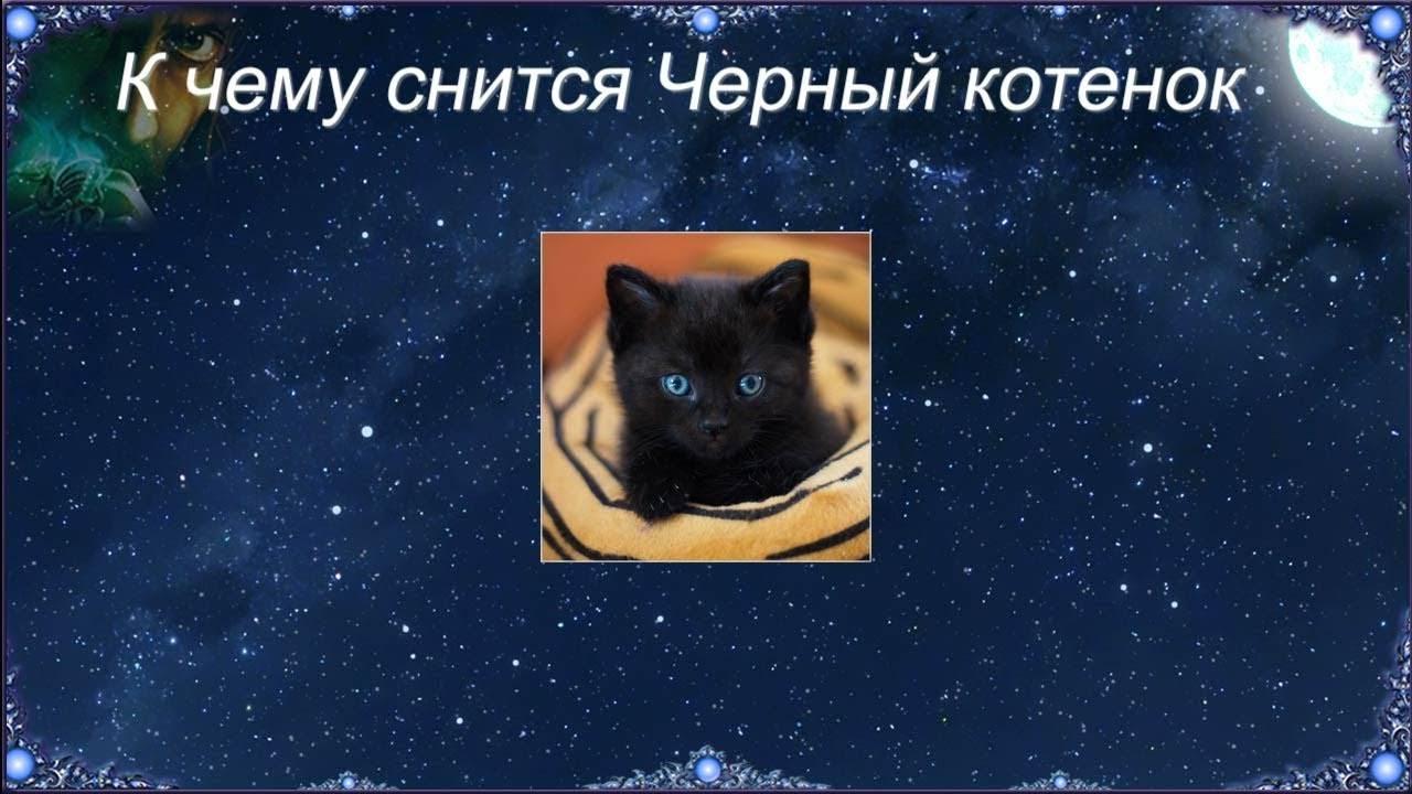 Много котят и кошек