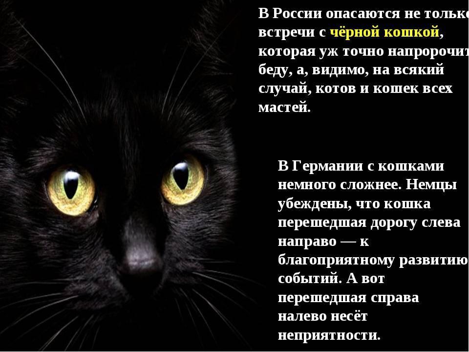Все о кошках черных. черные кошки: темная история с генетикой, особенности характера и прочая мистика | интересные факты
